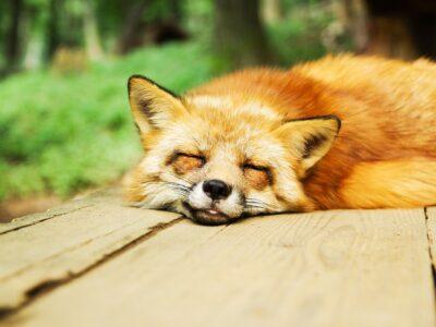 睡眠のおすすめ入門本ランキング8選!良質な安眠を手に入れよう!【2021年】